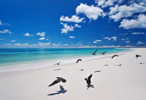 Seychelles- Bird island