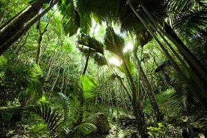 Vallée de Mai- Praslin- Seychelles
